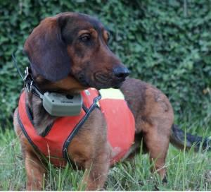 Tracker G1000 Maximal Satellitare senza limiti per cani da caccia